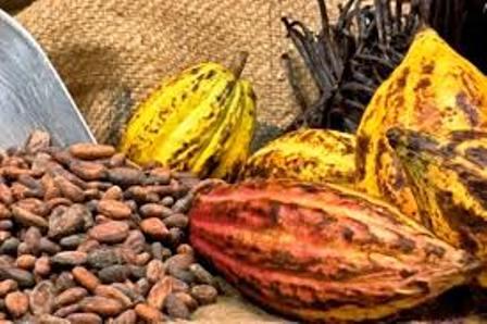 http://www.organiknusantara.com/2012/10/panduan-cara-budidaya-kakao-organik.html