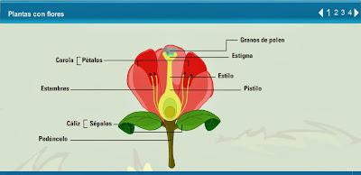 http://contenidos.proyectoagrega.es/visualizador-1/Visualizar/Visualizar.do?idioma=es&identificador=es_2009063013_7240070&secuencia=false#