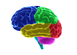 Healthy Brain Insights to 8 essentional things children need! http://bit.ly/Xx6S6t