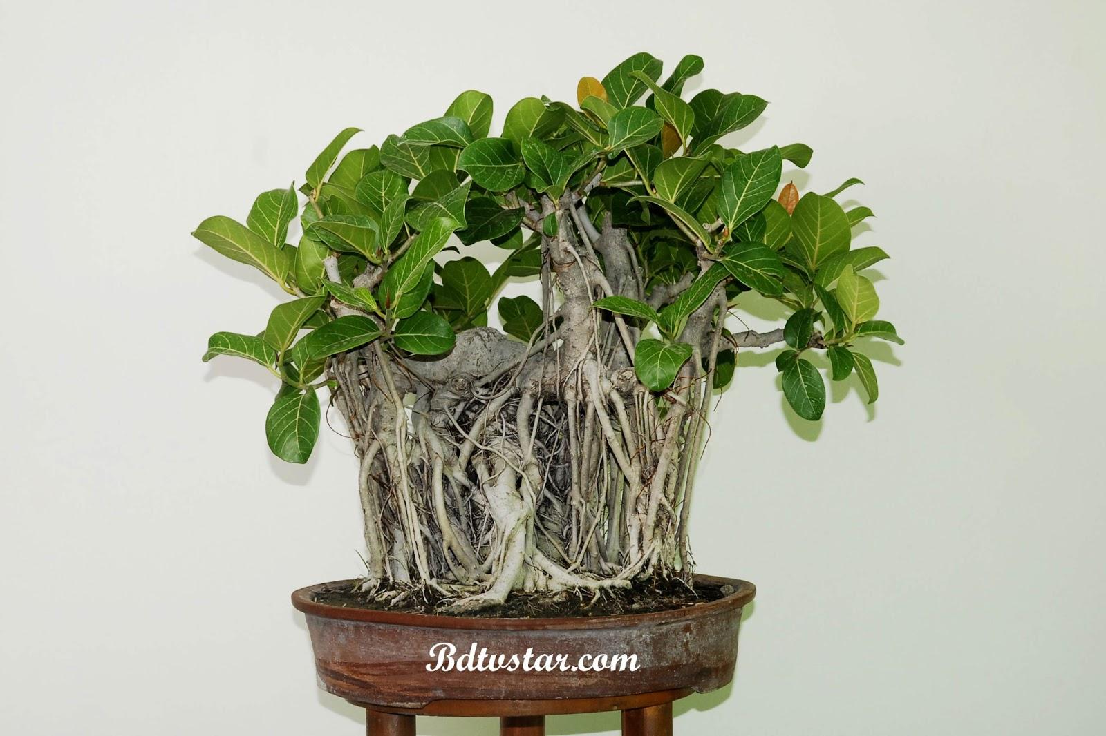 bonsai wallpaper 03 ndash - photo #47