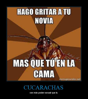 cucarachas chillar