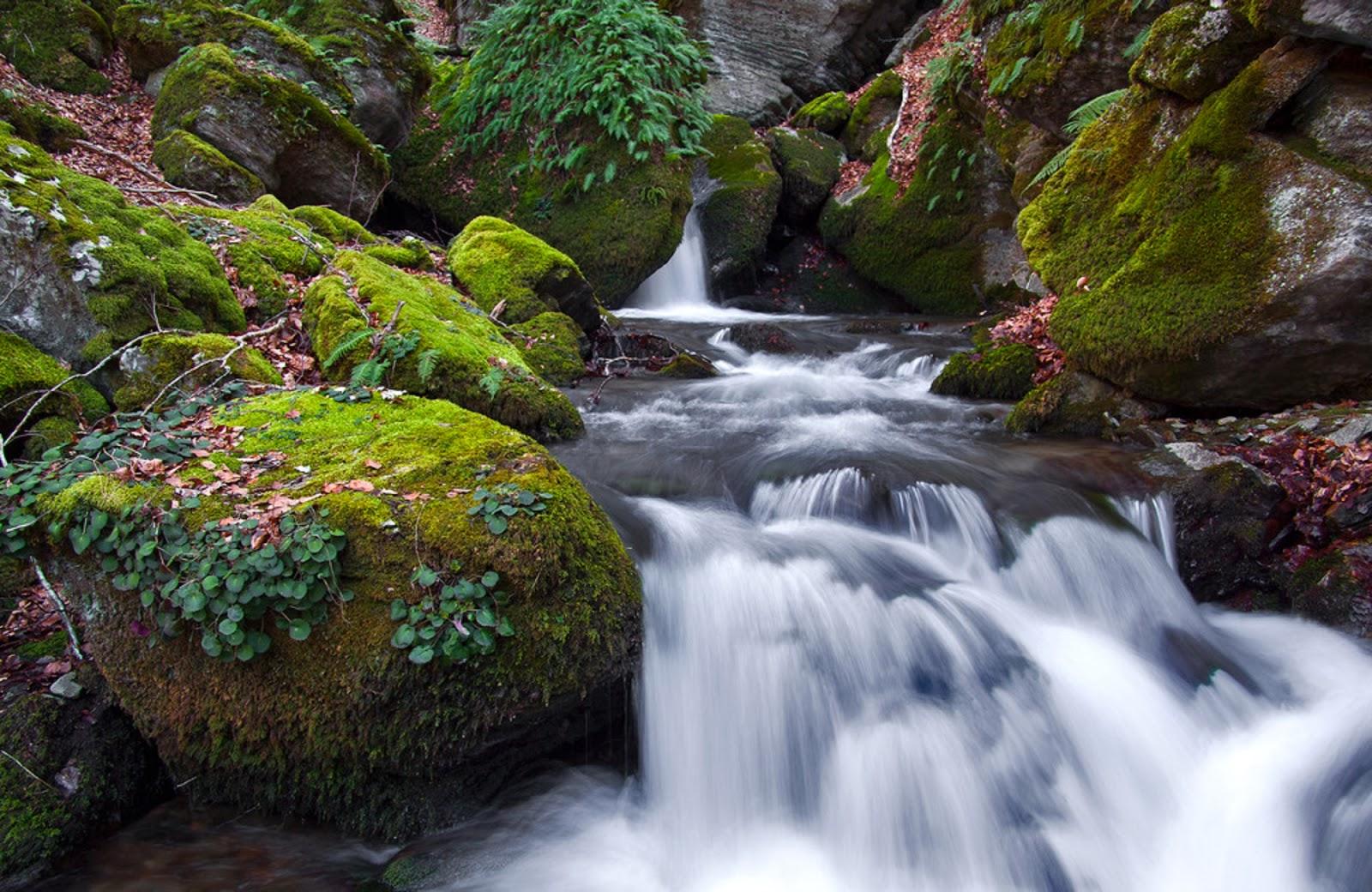 Paraísos terrenales | Fotos de naturaleza, animales, paisajes