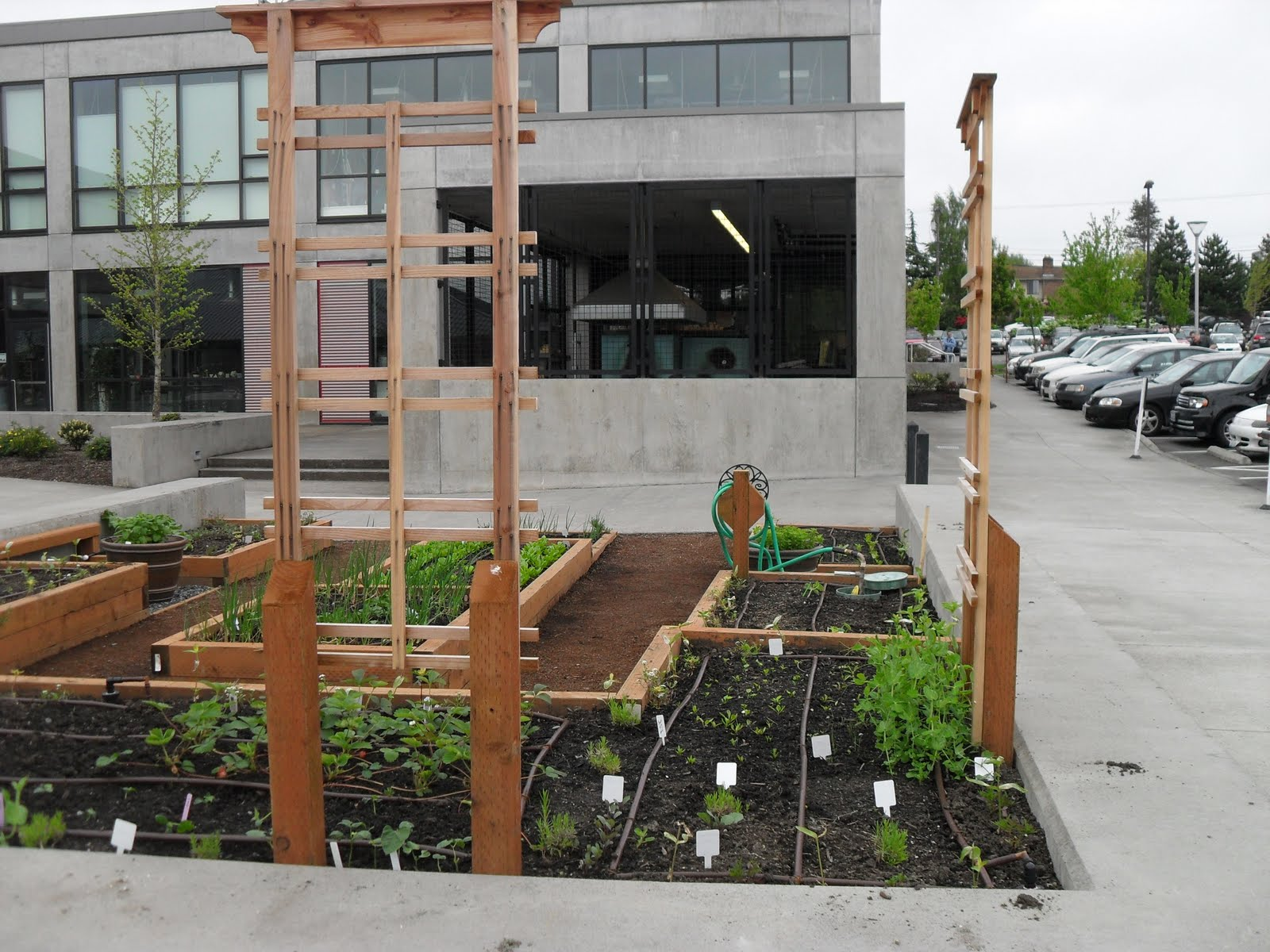 Cedar Grove Recently Supported Everett Community College Through A Compost  Donation As The Schoolu0027s Nutrition 180 U201cSustainable Food Systemsu201d Class  Built And ...
