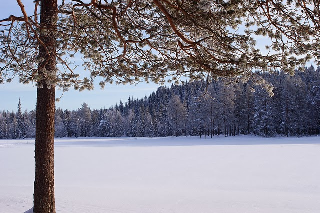 Poze de iarna