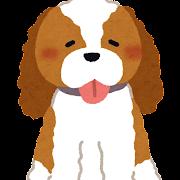 キャバリア・キングチャールズ・スパニエルのイラスト(犬)