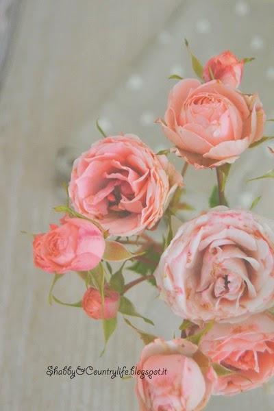 My shabby pink roses - shabby&countrylife.blogspot.it