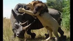 Wild Life - See Predators Hunt.