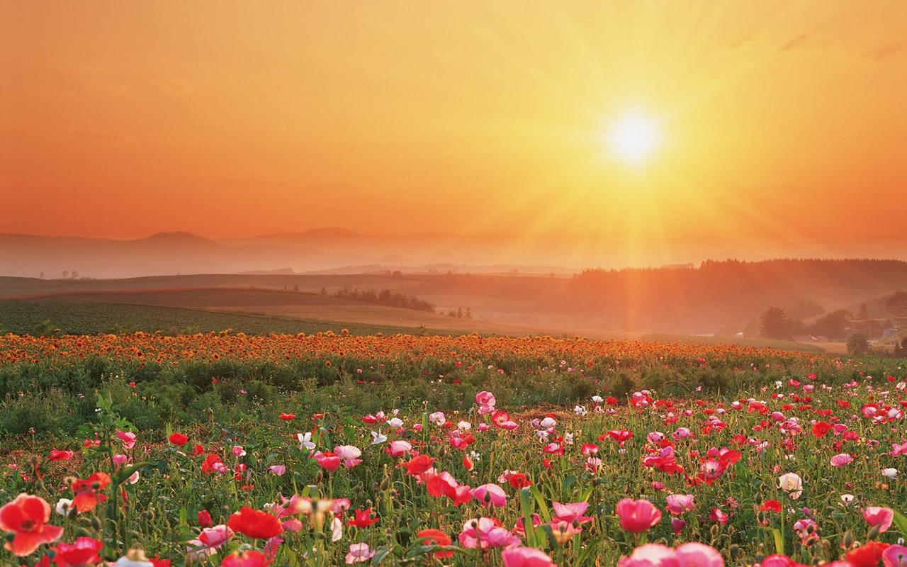 Beautiful field of flowers