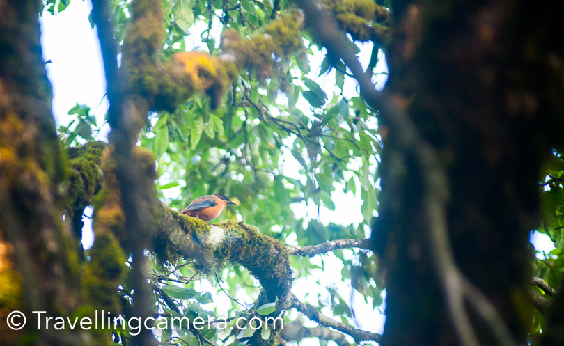In my last post, I shared about morning walk experience of Binsar Wildlife Scatuary and the famous Zero-point. During this walk, we saw various kinds of Birds and we could capture a few in our Travellingcamera. This Photo Journey shares some of the birding photographs and few of them are clicked around KMVN Binsar. Eaurasian Jay is most common bird around Binsar hills and they look beautiful.