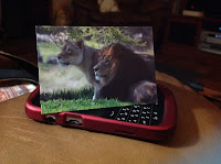 Lion note cards on cell phone