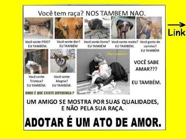 Adote um animal!!!!