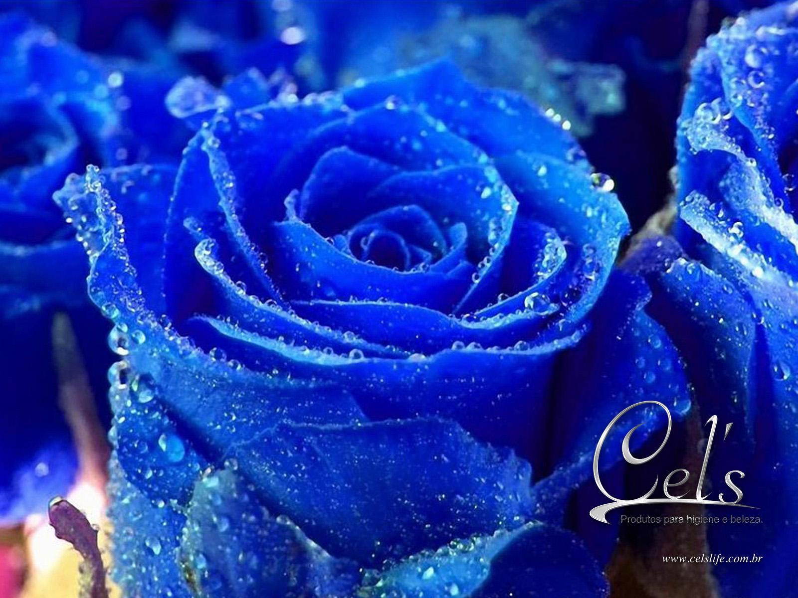 http://1.bp.blogspot.com/-YYvbp6AcNT8/Tt0lya-p8JI/AAAAAAAAC_8/vEUJxaCDqLA/s1600/wall_cels_06.jpg