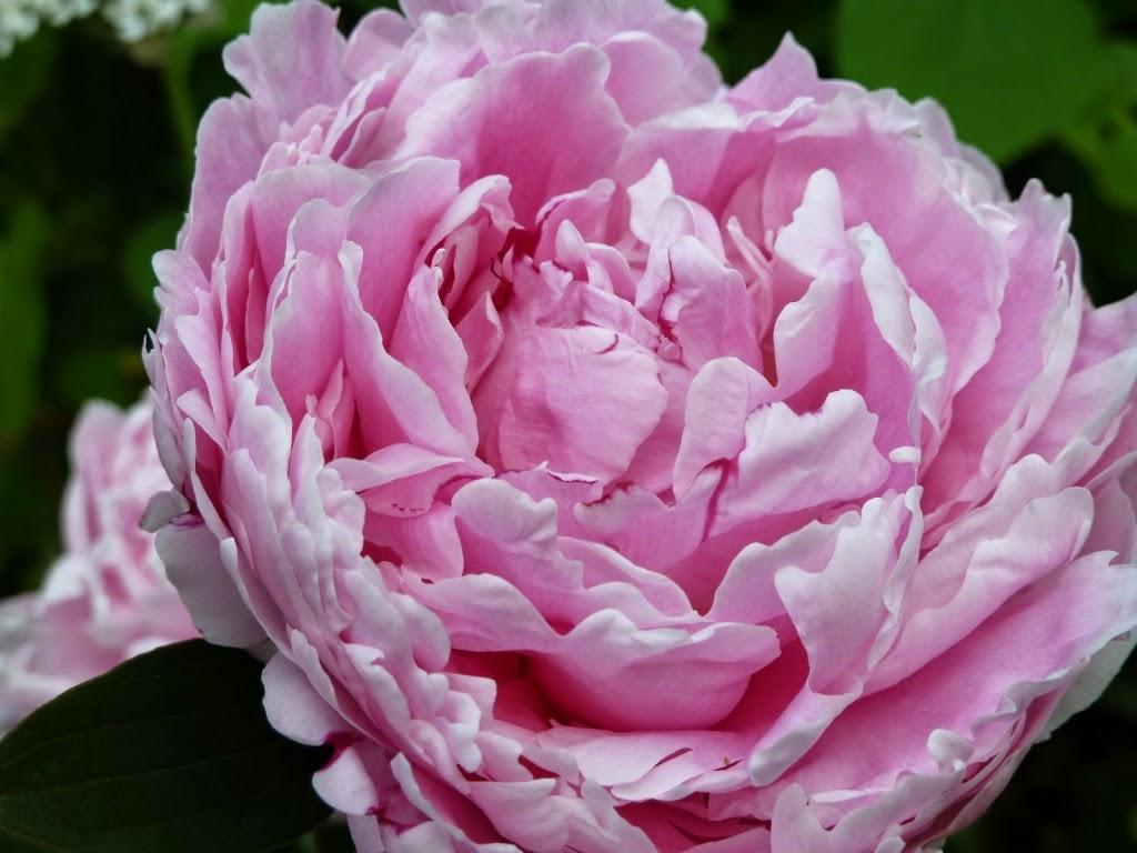 In m jn tuin tuinfoto 39 s juni 2014 - Bijzonder tuinfoto ...