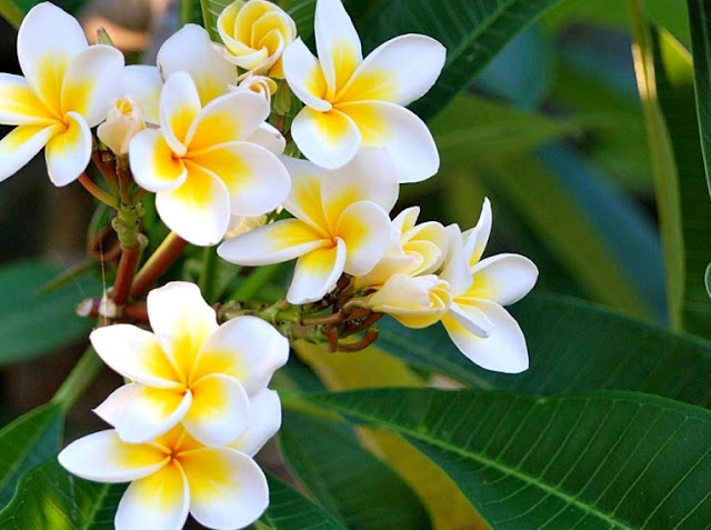 Bunga Mekar Cantik Menawan