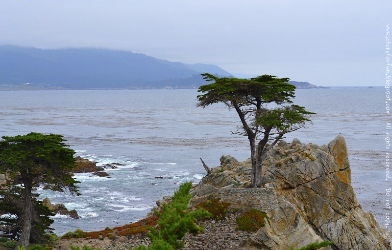 Lone Cypress Tree 17-Mile Drive Pebble Beach California Monterey Nsture Photography Tourism Travel