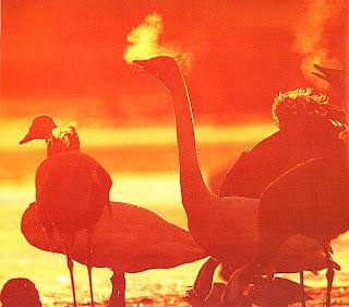 Птицы, освещенные сзади