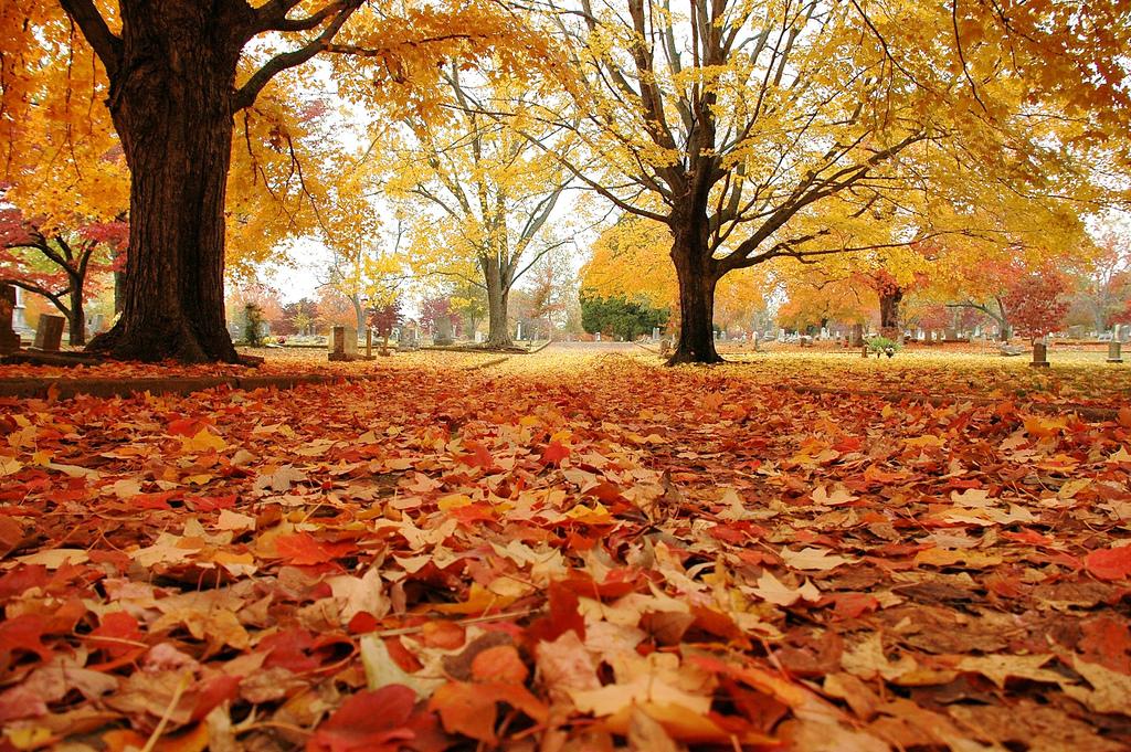 Resultado de imagem para começo outono