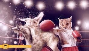 garros todo en gatos: