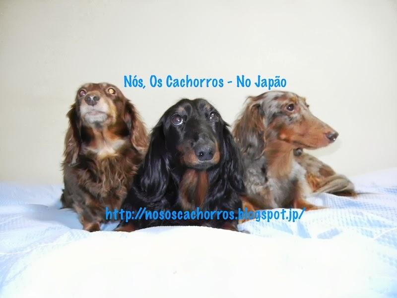 Nós, os Cachorros - No Japão