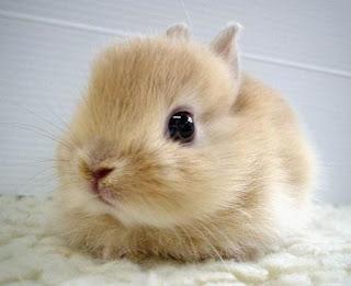 Rabbit Mythology