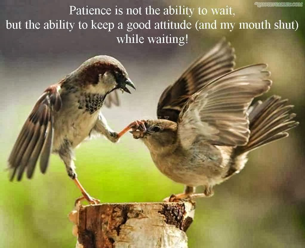 Kate Campbell\'s Word Garden: Word Up in the Garden -- Patience