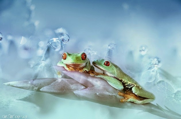Wil Mijer frog photography-8