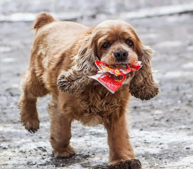 El perro que pide dinero... y se va de compras.