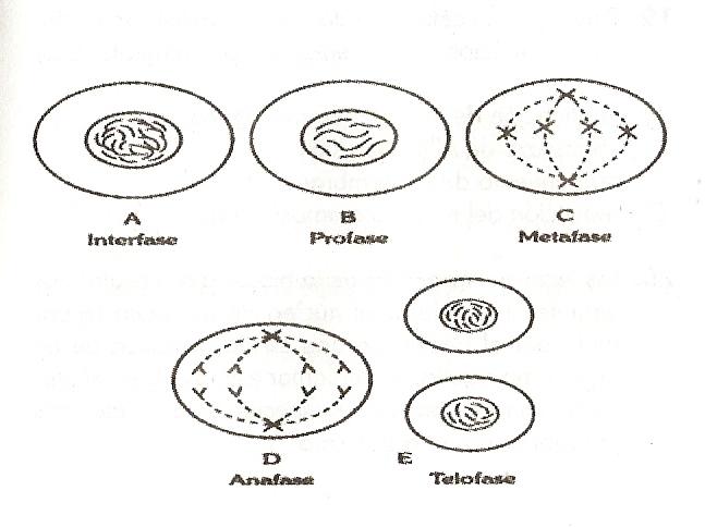 Ciencias Naturales Evaluaciones