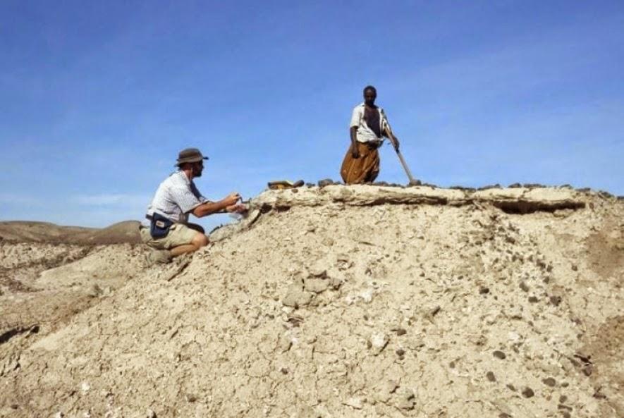 Cientistas descobrem o fóssil mais antigo do gênero humano