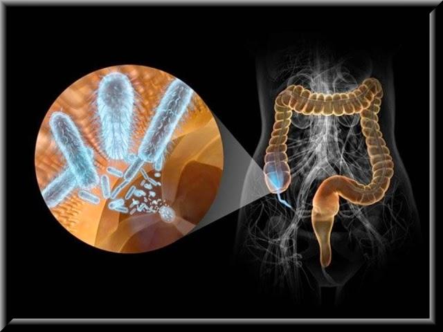 Клетчатка и масляная кислота в вашем кишечнике.