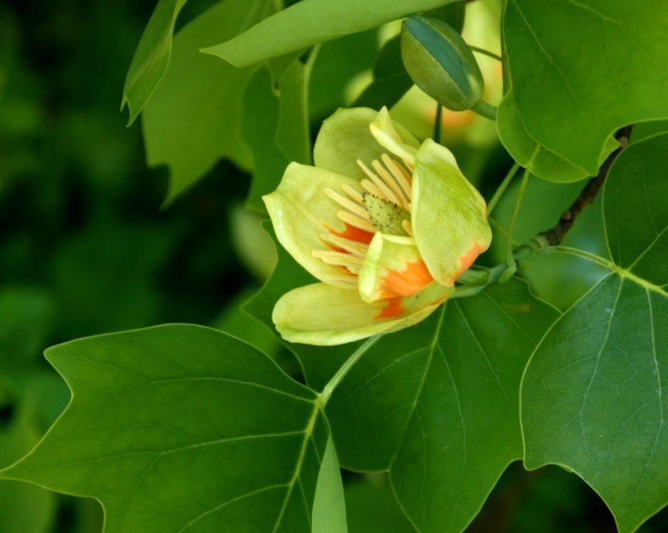Arboretum Explorer Website: