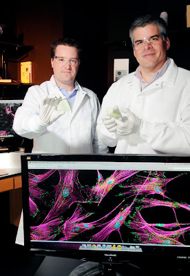 Researchers Todd McDevitt and Andres Garcia (l-r), Georgia Institute of Technology, hold microfluidic devices that are used to separate stem cells produced by cell reprogramming techniques. The devices exploit the differences in adhesion strength between derived stem cells and contaminating cell types in a heterogeneous culture to selectively isolate cells of interest using fluid shear forces. Credit: Gary Meek