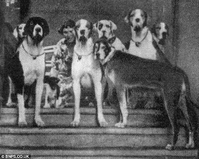 希特勒培訓 狗內閣