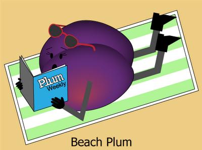Beach Plum