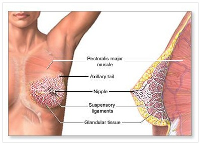 Prevent Sagging Breasts Naturally with THESE Tips! -