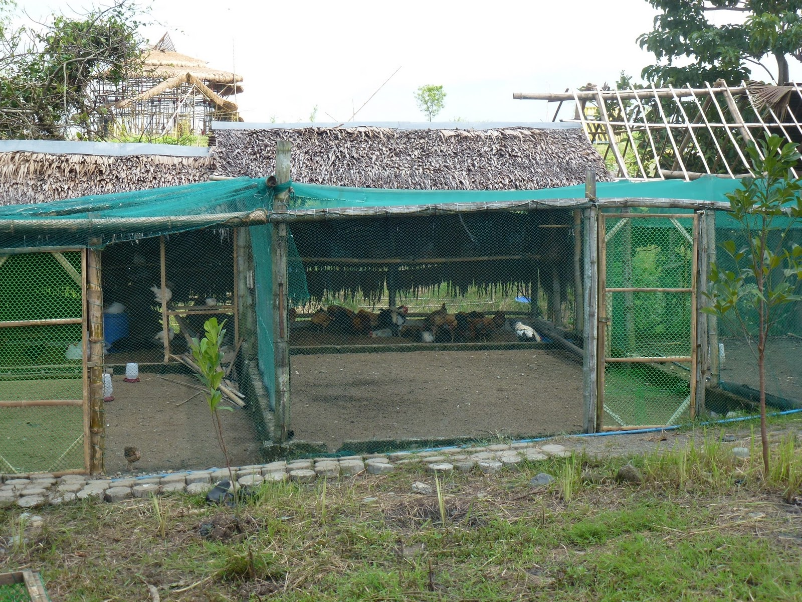 Existing ranging house for their current native chicken flocks