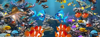 Phot de Couverture Facebook Aquarium