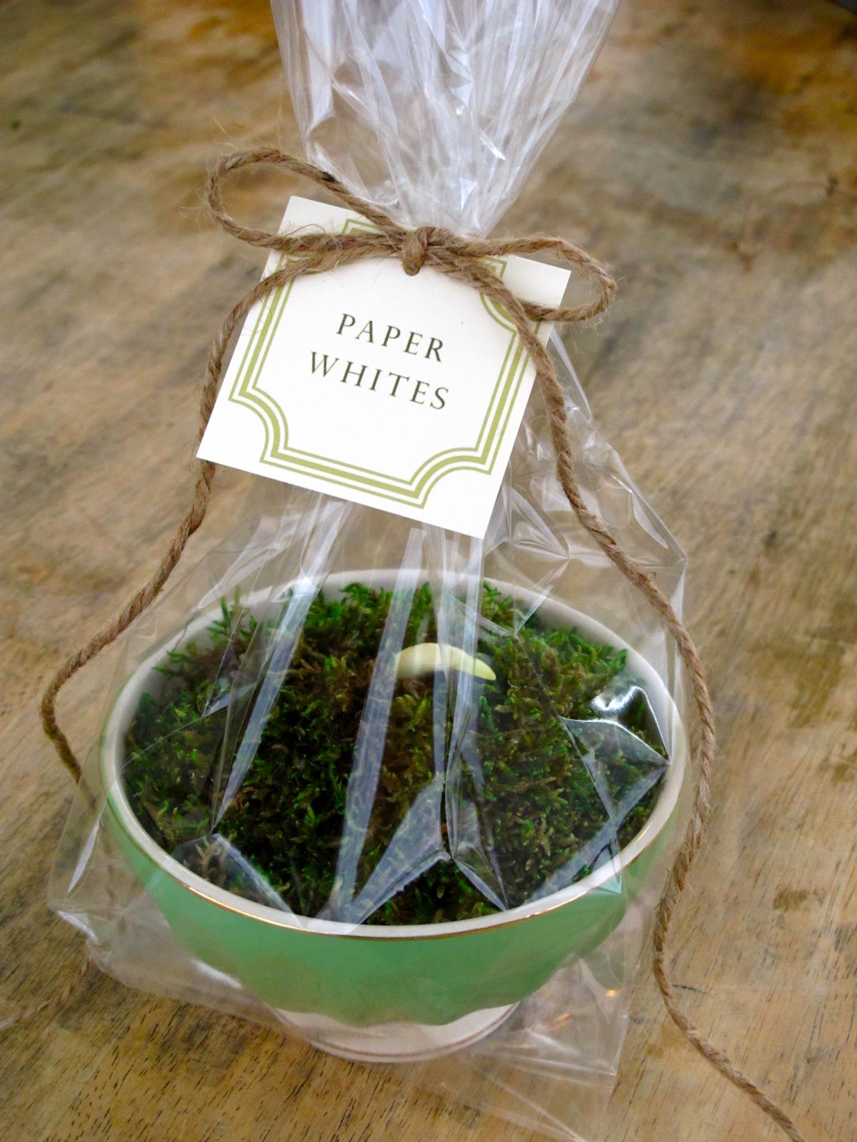Jenny steffens hobick potted paper whites hostess gift idea Hostess gift