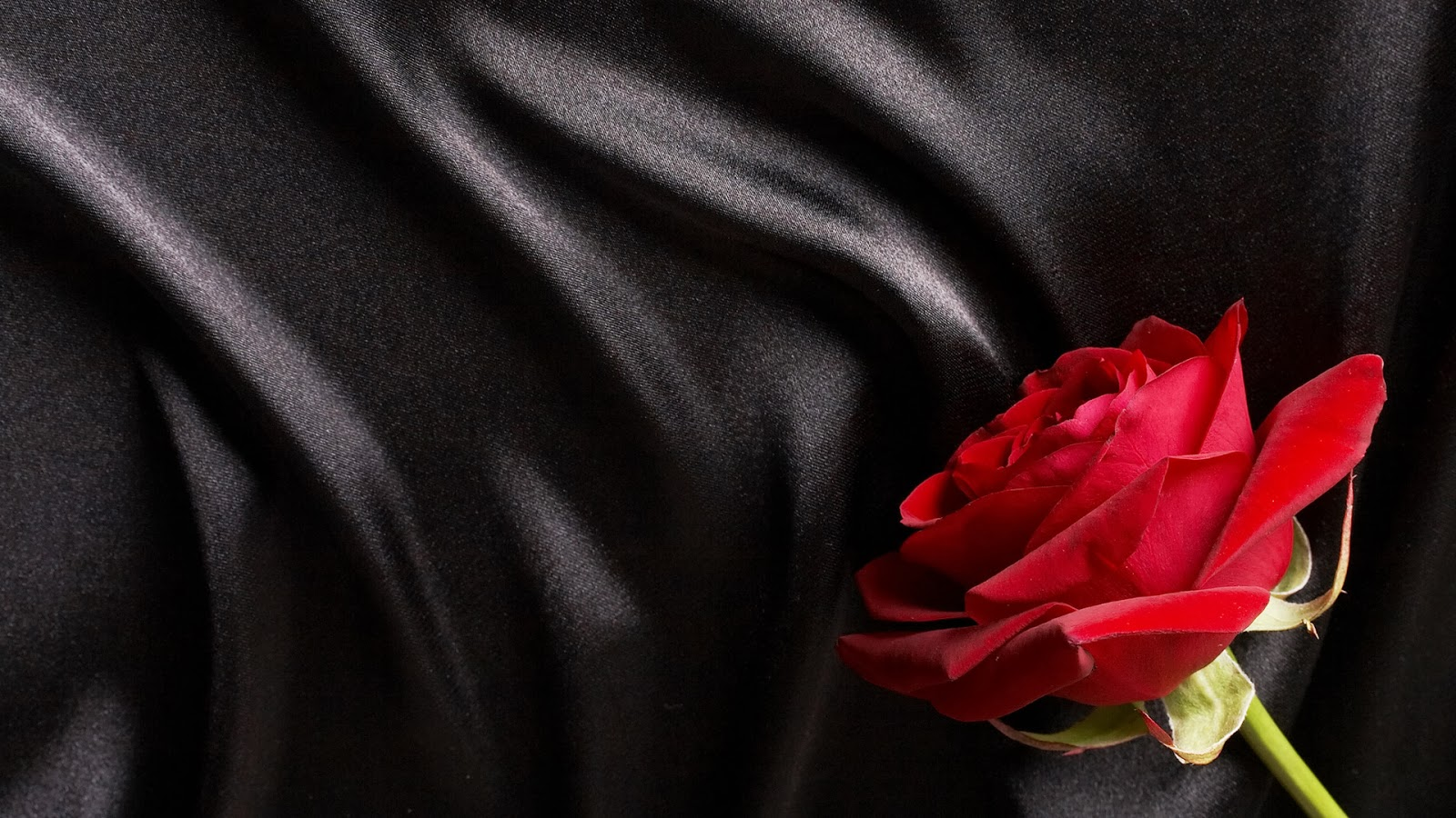 Red-Rose-Black-background-Template-stock-images-free-download.jpg