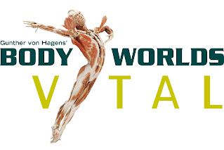 body worlds logo with a women streched out in a work out position