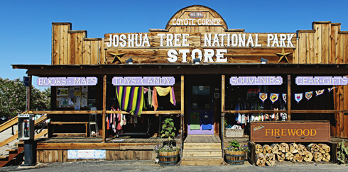 joshua tree travel photography