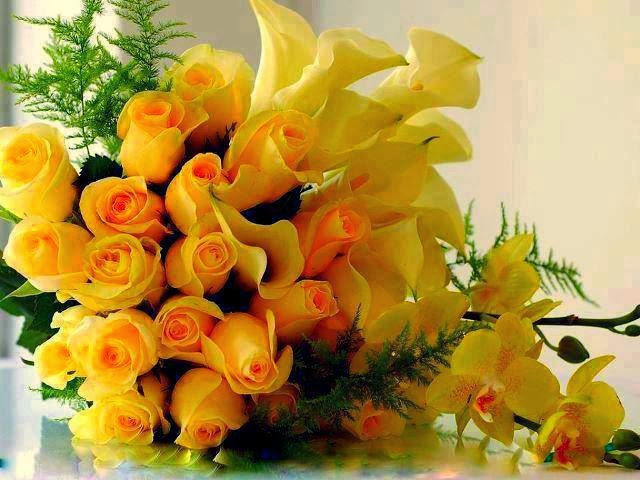 free all hd flowers  all new latest flowers, Beautiful flower