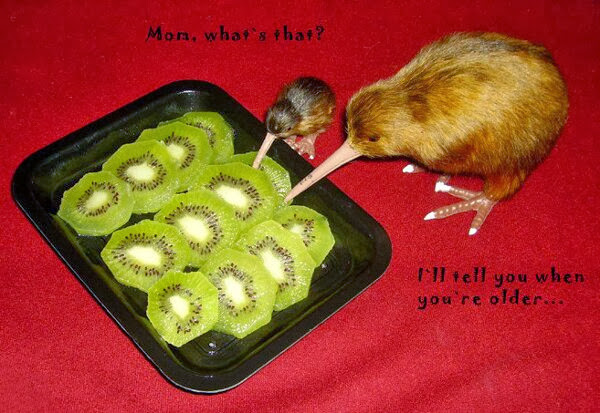 30 Funny animal captions - part 18 (30 pics), funny kiwi eats kiwi, kiwi meme