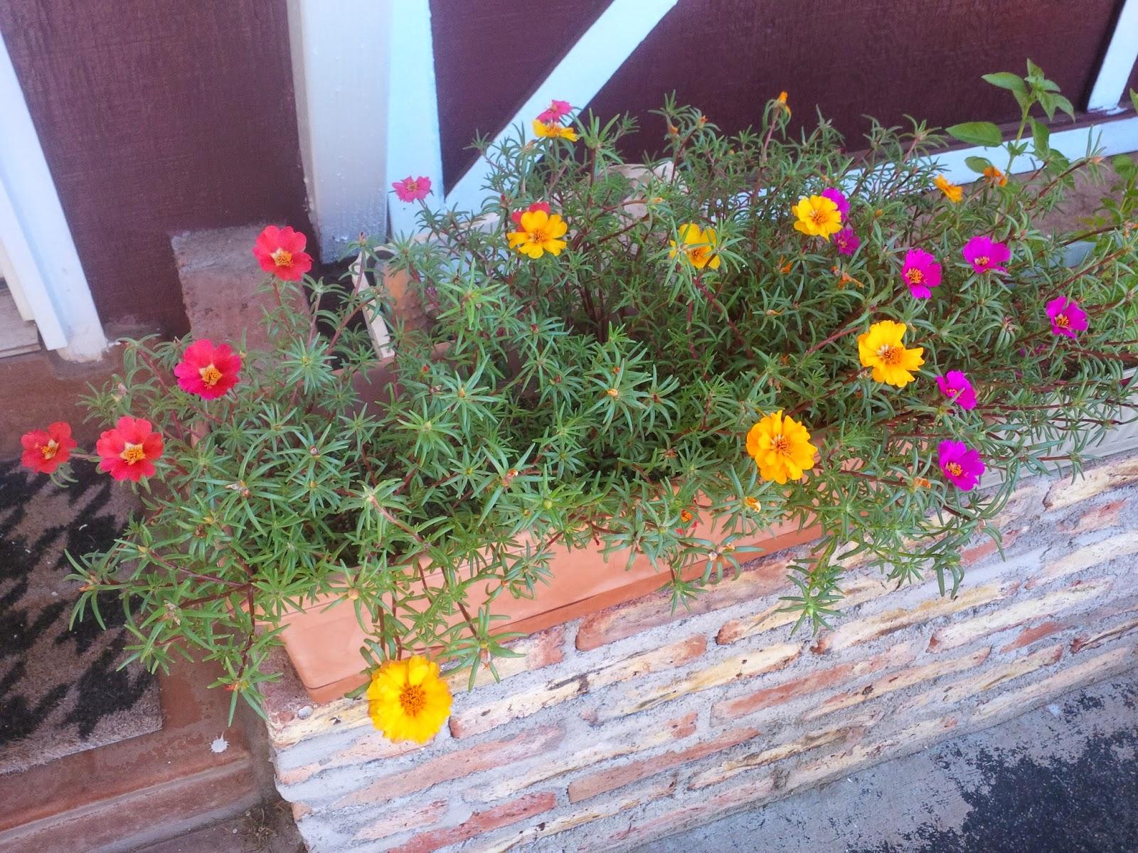 Growing like Wildflowers