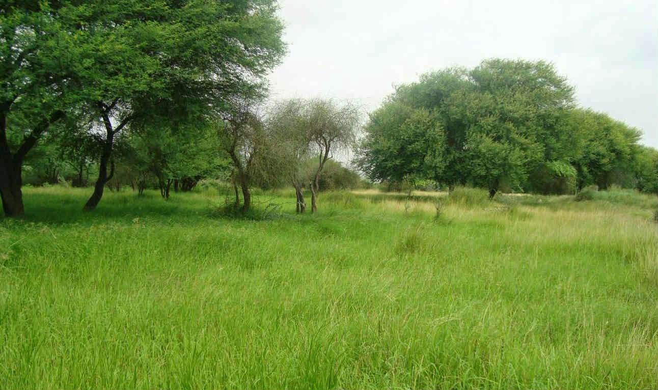 The Banni Grasslands