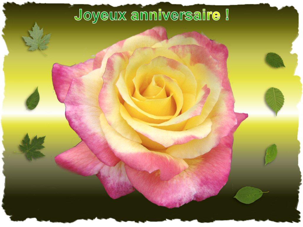 """Résultat de recherche d'images pour """"rose d'amitié bon anniversaire"""""""