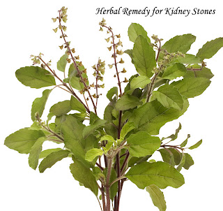 herbal remedy for kidneys