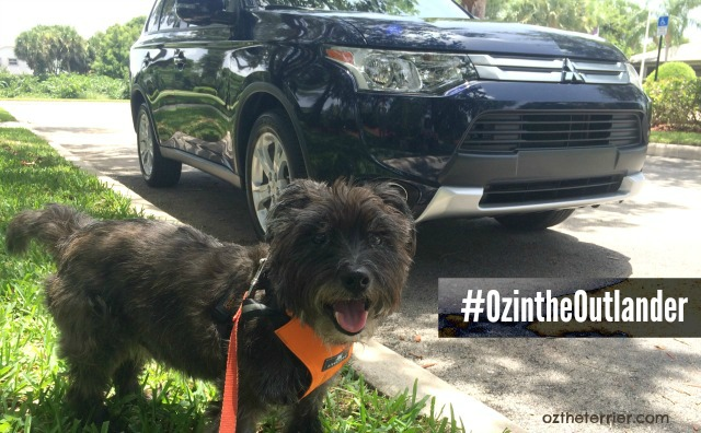 Oz the Terrier receives a Mitsubishi Outlander to test-ride