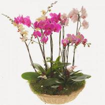 Орхидеи. Личный опыт.