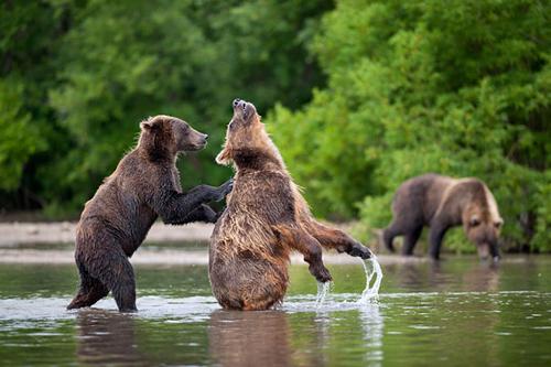 As Melhores Fotos de Ursos Selvagens de Todos os Tempos